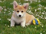 dog-playing-with-ball_1200[1]